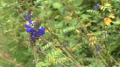 A Purple Wildflower Dancing in the Breeze Stock Footage