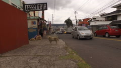 A Dirty Stray Dog Waits for a Meal on the Streets of Quito Stock Footage