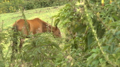 A Horse Grazes in the Pasture beyond the Vegetation - stock footage