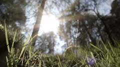 A Naturally Beautiful Ancient Woodland Stock Footage