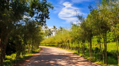 Camera Moves along Park Ground Road between Rows of Plants Stock Footage