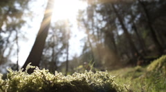 Stock Video Footage of A Naturally Beautiful Ancient Woodland