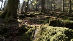 A Naturally Beautiful Ancient Woodland - stock footage