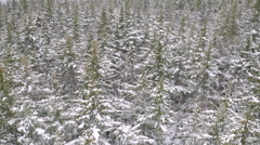 Aerial Looking Down Over Snowy Forest 4K Stock Footage