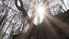 A Naturally Beautiful Ancient Woodland In The UK Stock Footage