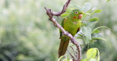 Brazilian Parrot Sitting On A Branch In A Tree Stock Footage