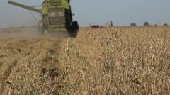 Thresher cultivator harvesting ripe oat ears in summer agriculture field. 4K Stock Footage