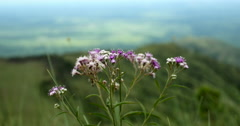 Flowers. On Top of Mountain. Chapada dos Guimaraes, Brazil Stock Footage