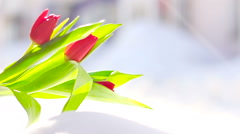 Red Flower Tulip in the Fresh Snow Stock Footage
