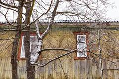 bare tree and wall of old wooden house - stock photo