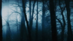 Poisonous spider on web in night misticaly forest. Stock Footage
