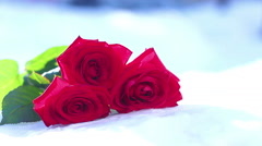 Red rose on snow. A flower, winter, a frost Stock Footage