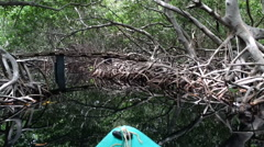 Kayak in a mangrove swamp with a wooden bridge encountering a family of tourists Stock Footage