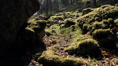 Sunlight Hitting The Woodland Floor With Moss And Grass Stock Footage