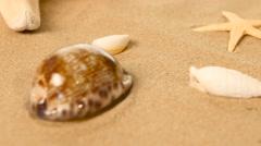 Beautiful large shells lie on the sand, sea stars, rotation, closeup Stock Footage