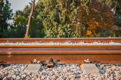 Railroad track in a rural area in the afternoon - stock photo