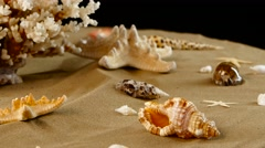 Variety of colorful sea shells and coral, black, rotation Stock Footage