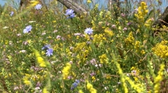 Yellow flowers and blue and pink that moves in the wind dry of summer Stock Footage