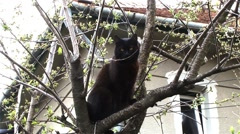 Black cat sitting in a tree looking at the world around them Stock Footage