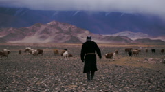 Old man tending a flock of goats and sheep in desert Mongolian hills Stock Footage