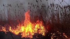 Fields of dry reeds on fire put a person who wants to clean up the place Stock Footage