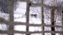 Man leading a horse holding it by the bridle is seen through an wooden fence Stock Footage