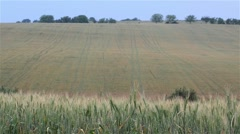 Wheat crop which is not yet ripe and harvested barley field Stock Footage