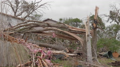 Tornado aftermath - large trees snapped Stock Footage