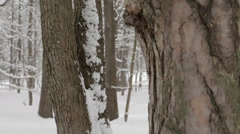 Snow falling in the park. Pine trunk under snow. Stock Footage