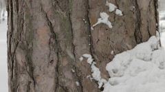 Snow falling against the tree trunk. Stock Footage