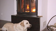 Dog lying in front of fireplace - stock footage
