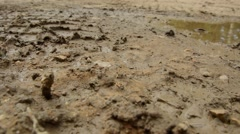 Debris and dirt - stock footage