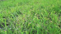 Detail of green fresh grass - slowmotion Stock Footage