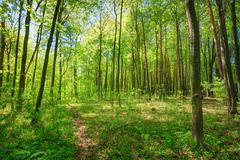 Stock Photo of Green Deciduous Forest Summer Nature. Sunny Trees And Green Gras