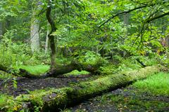 Rich deciduous stand in heavy rain Stock Photos