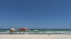 Camels on the beach in Tunisia Stock Footage
