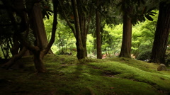 Japanese Gardens Surreal Forest Stock Footage