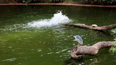 pond with bird at Kowloon Park - stock footage