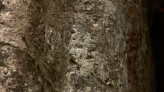 Tree growing on building in Ta Phrong Stock Footage