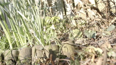 Garden Fork Digging A Veggie Patch With Compost In Spring - stock footage
