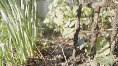 Get Ready As Its Time For Weeding The Garden - stock footage
