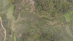 Stock Video Footage of AERIAL OVERHEAD SHOT OF BEAUTIFUL SYMMETRICAL TEA FIELDS