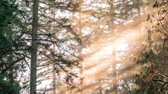 Sun Lit Fog Background in Hazy Pacific Northwest Forest at Golden Hour Stock Footage