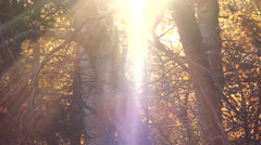 Enchanted Light Autumn Forest Flares and Rays 4K Stock Footage