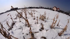 Remnants of a corn plantation covered by snow at the edge of a deserted village Stock Footage