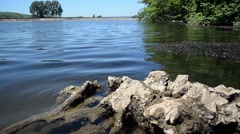 Old tree trunk sitting in water at a lake Stock Footage
