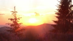 Sun reddish sunset over a fir forests Stock Footage