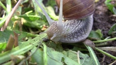 Garden snail with a shell on moving back to earth among tall grasses Stock Footage