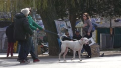 People walking with a big white dog in a public place park in city center Stock Footage