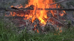 Fire flame burn near forest trees in summer. 4K Stock Footage